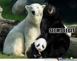 Memes De Pandas - how pandas come