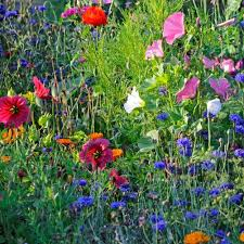 amazon com earthcare seeds wildflowers for shade 10 000 seeds