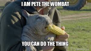 Wombat Memes - i am pete the wombat you can do the thing motivational wombat