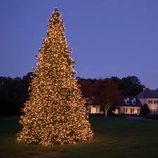 lighted christmas tree decoration ideas amazing image of outdoor christmas decoration