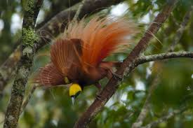 Canopy Birds by Birds Of Paradise National Geographic Society