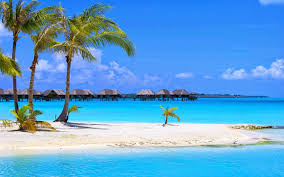 tropical background 21 wallpapers u2013 adorable wallpapers
