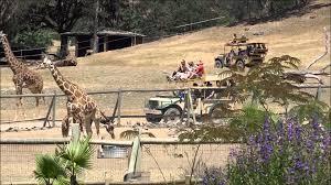 California wildlife tours images Wild safari animal park in california wine country jpg