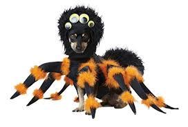 Mini Dachshund Halloween Costumes Small Dog Halloween Costumes Dachshunds Small Breeds