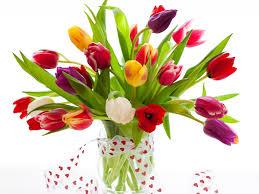 Beautiful Flowers Image Image Of Flower Qygjxz