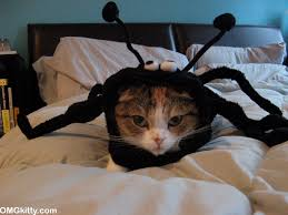 Scary Halloween Animals by Omgkitty Oh No Scary Spider Cat Happy Halloween
