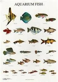 80 best fishes are awesome for tanks images on