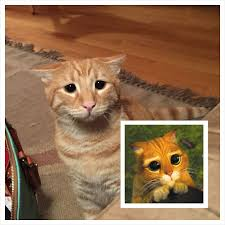 10 cats adorable u0027puss boots u0027 eyes