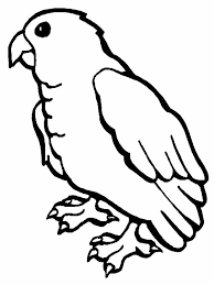 baby parrot coloring download u0026 print coloring pages