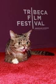 lil bub movie tribeca film fest screening delights fans