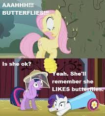 Mlp Fluttershy Meme - mlp fluttershy meme by cnbcustoms on deviantart