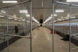 net 0 egg barn blog u2013 hen housing installed egg farmers of alberta