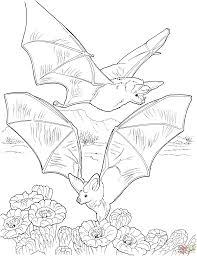 bat coloring page great bat coloring pages printable for kids
