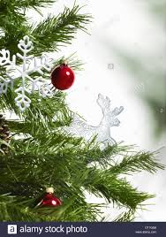 green leaf foliage and decorations a pine tree branch christmas