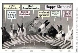 rabbit birthday rabbit birthday postcard