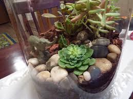 fake terrarium plants fallcreekonline org