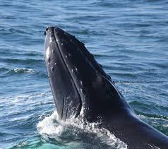 hyannis whale watcher cruises home facebook