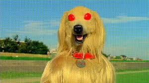 afghan hound gif dog gifs find u0026 share on giphy