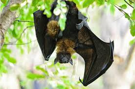 get rid of bats easily with pictures slay all pest