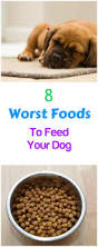 8 worst foods you can feed your dog petslady com
