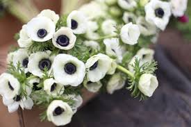 anemones flowers this week floret flowers