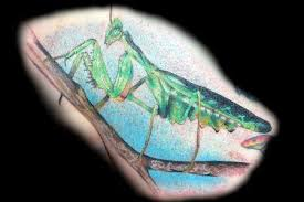 graceland tattoo kiosk tattoos diego praying mantis