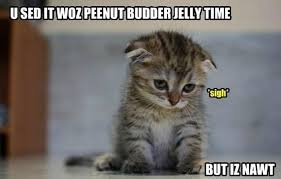 Cute Kitty Memes - why don t cats in memes know grammar okay popculturemom