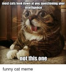 Funny Cat Memes - 25 best memes about funny cat memes funny cat memes
