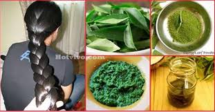 for hair how to use curry leaves for hair growth
