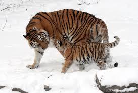 endangered species wikipedia