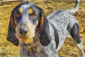 bluetick coonhound apparel bluetick coonhound painting by laurence canter