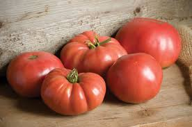 german johnson organic tomato seed johnny u0027s selected seeds