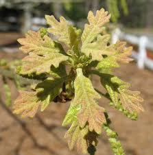 native plant nurseries oregon using georgia native plants april 2011