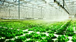 the internet of things meets hydroponics how to grow a fast company