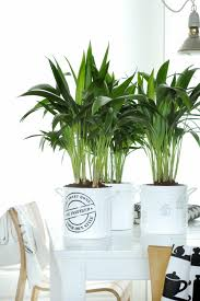 plants that grow in dark rooms which house plants need little light