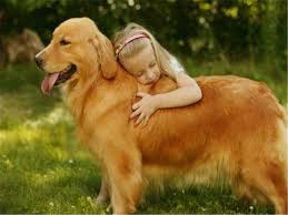 golden retriever dog wallpapers full hdq golden retriever dog