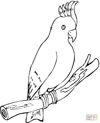 parrot coloring pages getcoloringpages com