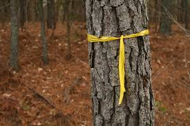 symbolism of a tree awareness ribbon wikipedia