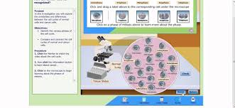 cell cycle and cancer virtual lab instructions youtube