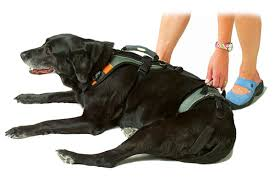 54 harness to help dog up stairs solvit carelift dog harness and