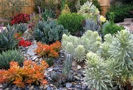 16 cactus rock garden designs ideas design trends premium