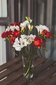 Pretty Types Of Flowers - best 10 freesia flower photos ideas on pinterest freesia
