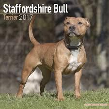 staffordshire bull terrier calendar dog breed calendars 2016