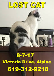 Missing Cat Meme - lost cat large male white with grey spots victoria drive