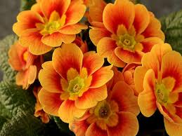 wallpaper bunga warna orange god the creator images god s beautiful orange flowers hd wallpaper