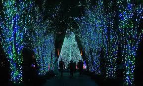 Botanical Gardens Lights Alpharetta Ga Apartments For Rent Parc Alpharetta 55