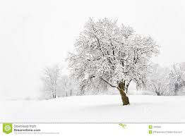 snow tree stock images image 7683564
