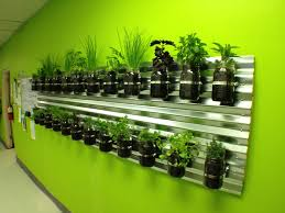 kitchen herbs our kitchen herb garden grow your food small spaces pinterest