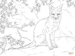 sitting gray fox coloring page free printable coloring pages