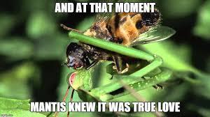 Mantis Meme - mantis eating fly alive imgflip